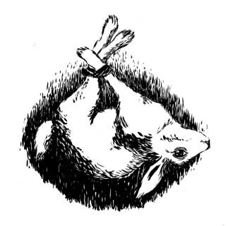 Dead Rabbits Podcast