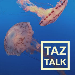 TAZ Talk