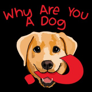 Why Are You A Dog?