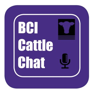 BCI Cattle Chat