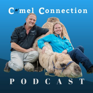 Camel Connection Podcast