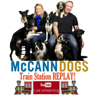 McCann Dog Training - Train Station Replay