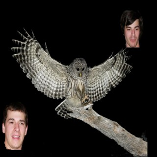 Owls and Pals
