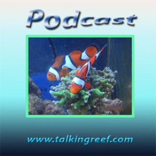 Talkingreef