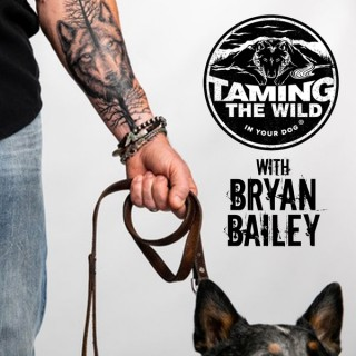 Taming the WILD in Your Dog