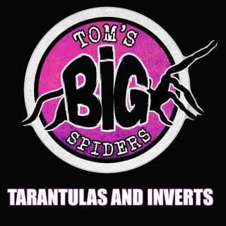 Tom's Big Spiders - Tarantulas and Inverts