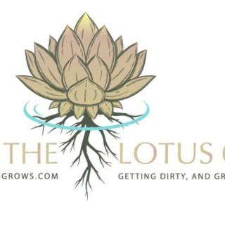Where The Lotus Grows