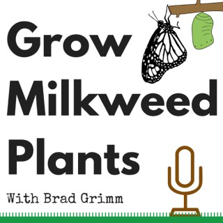 Grow Milkweed Plants