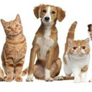Veterinary Advice, Animal News & Views with hosts, Dr. Roger Welton & Dr. Karen Louis