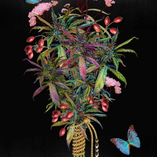 Cool Nerd Weed Show
