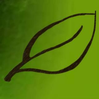 Spring Branch Podcast