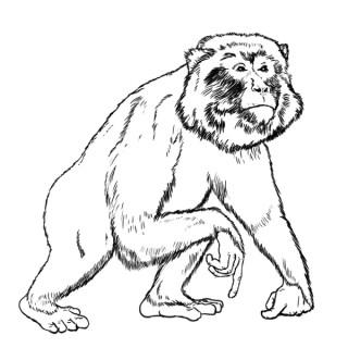 Ape Reality
