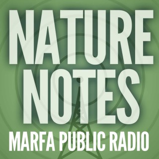Nature Notes from Marfa Public Radio