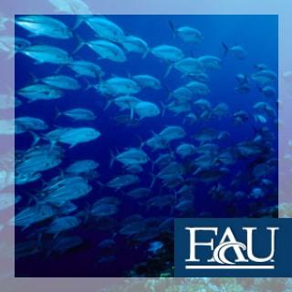 Ocean Science Lecture Series - Video