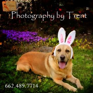 Trent Photo Videos