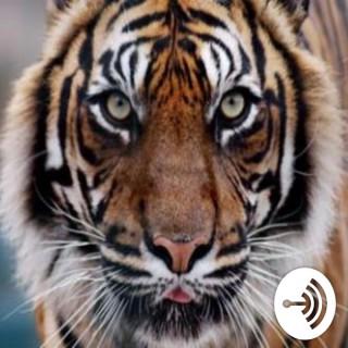 Detroit Tigers Minor League Tracker