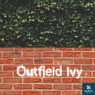 Outfield Ivy