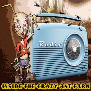 Inside The Crazy Ant Farm