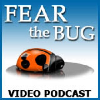 Fear the Bug Video Podcast (SD)