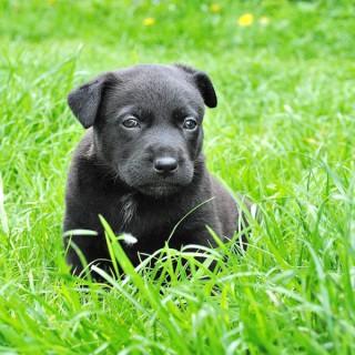 DogSpeak: Redefining Dog Training