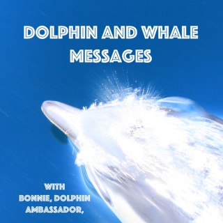 Dolphin And Whale Messages