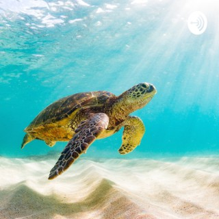 Pure Turtle Guided Meditations