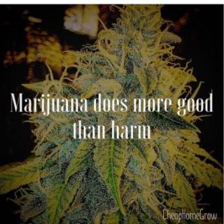 Learn How To Grow Cannabis Indoors Podcast