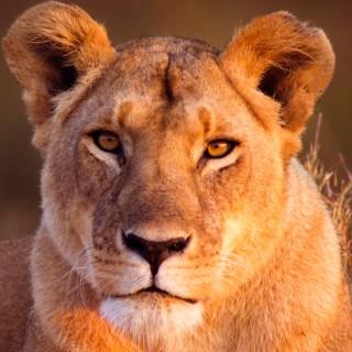 Lionhearted with Dr. Steve Rasner