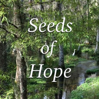 Seeds of Hope: Homilies by Fr. Mike Muhr