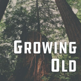 Growing Old: Tales from an Urban Canopy
