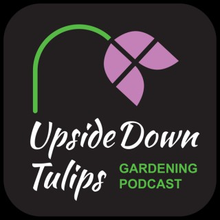 Upside Down Tulips - A Garden Podcast