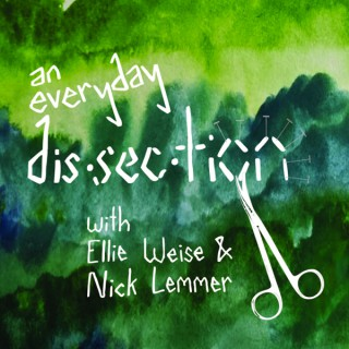 An Everyday Dissection