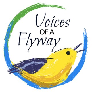 'Voices of a Flyway' Podcast