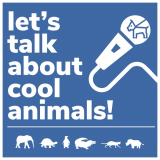Let's Talk About Cool Animals!