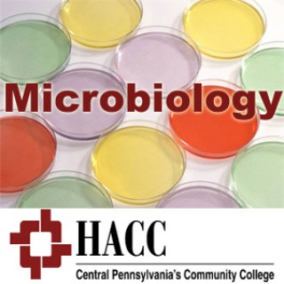 BIOL 221- Microbiology - eb