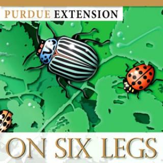 On Six Legs
