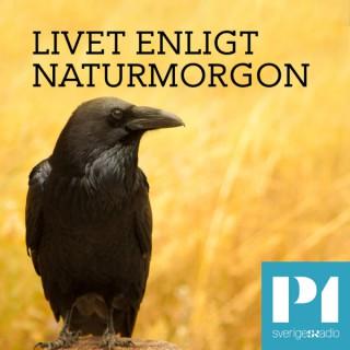 Livet enligt Naturmorgon
