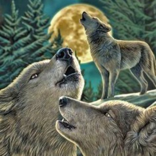 Wolf Pack Unleashed