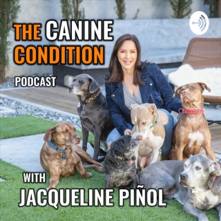 The Canine Condition