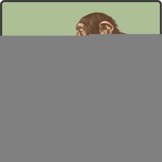 Pondering Monkeys Podcast