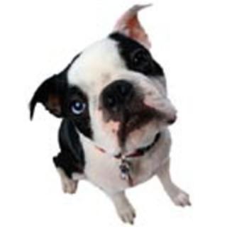 Noah's Bark!  From PhoneDog.com