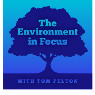 The Environment in Focus