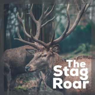 The Stag Roar: Life Less Ordinary