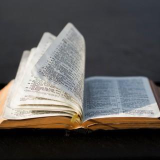 Simon reads the Bible