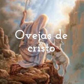 Ovejas De Cristo Sparks, NV.