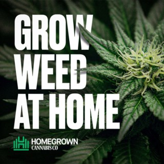 Grow Weed at Home with Homegrown Cannabis Co