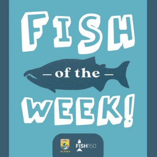 Fish of the Week!