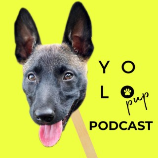 YOLO PUP PODCAST