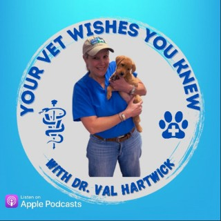 Your Vet Wishes You Knew
