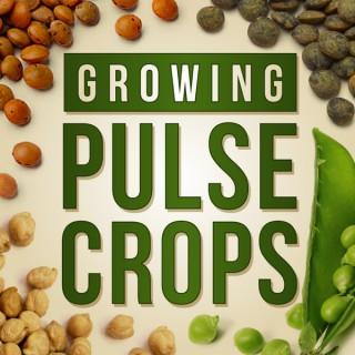 Growing Pulse Crops